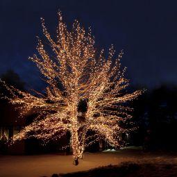 System Expo ljusslingor utomhus på träd