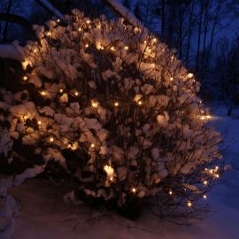 System 24 miljöbild med ljusslingor runt buske