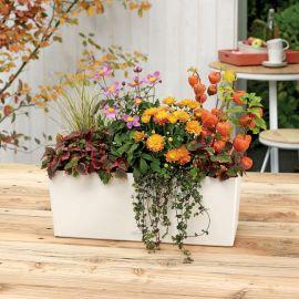 Självvattnande Blomlåda Balconera Color 50cm vit